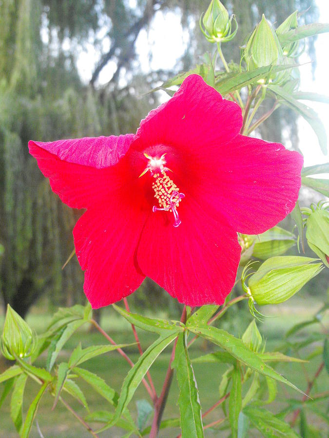 Flower Photograph by Christy Bearden