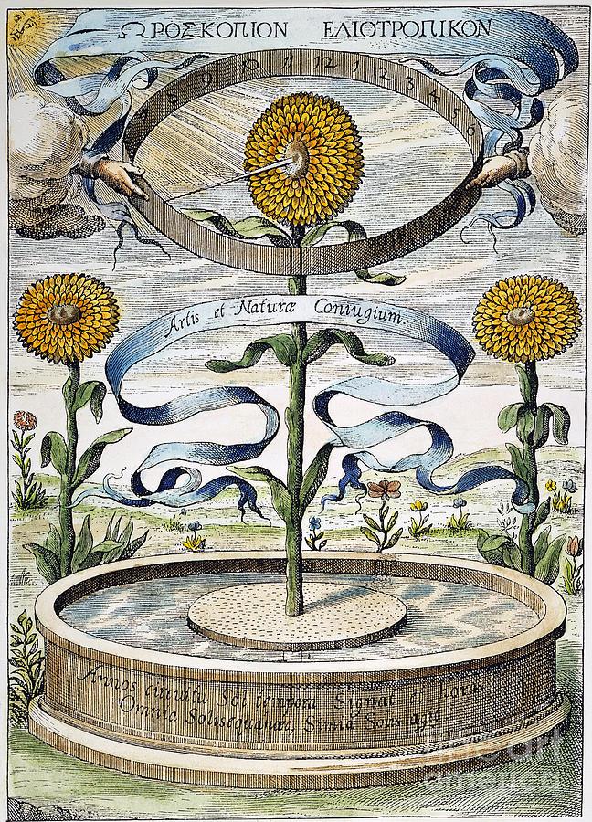 1643 Photograph - Flower Clock, 1643 by Granger