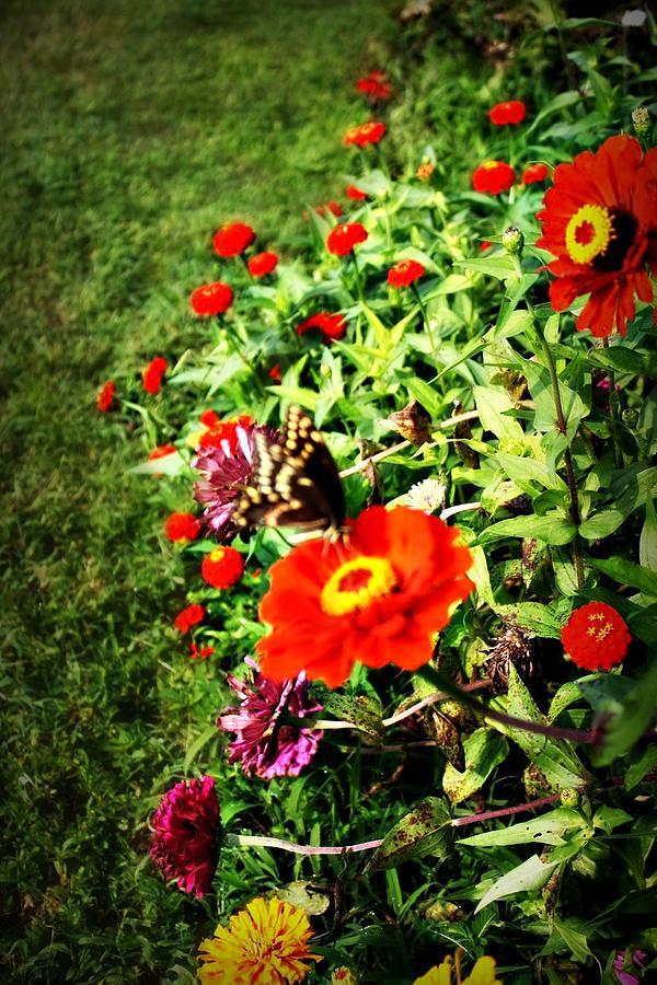 Flower Photograph - Flower Dance by Jill Tennison