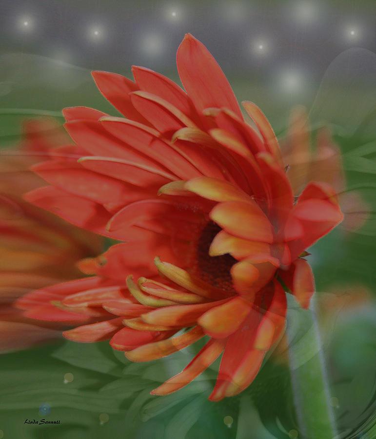 Flowers Photograph - Flower Dreams by Linda Sannuti