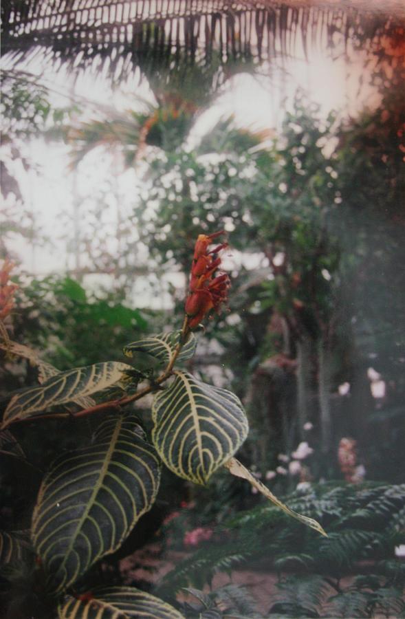 Nature Photograph - Flower by Erin  Svendsen