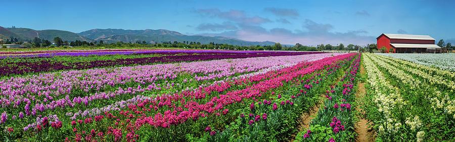 Flower Farm Heaven Panorama by Lynn Bauer