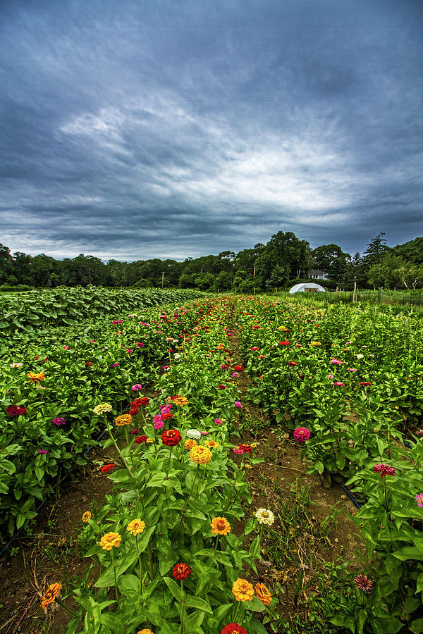 Flower Field at North Sea Farms by Robert Seifert