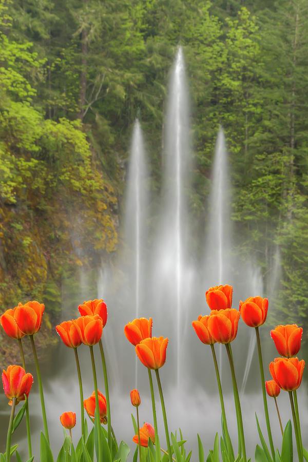 Flower Fountain Photograph