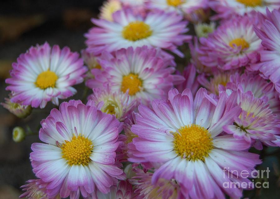 Flowers Photograph - Flower Garden by Garnett  Jaeger