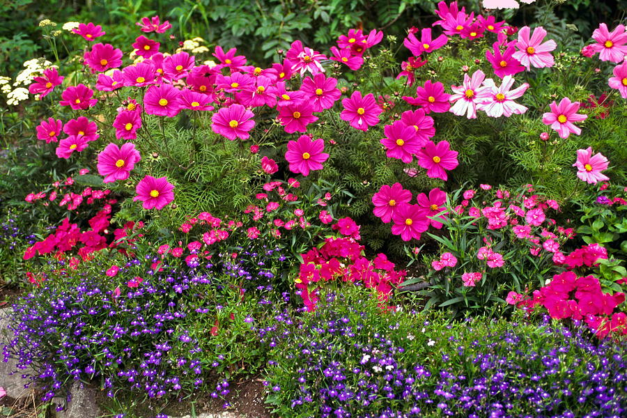 Flower Garden In Rose Pink And Purple Photograph By Sally