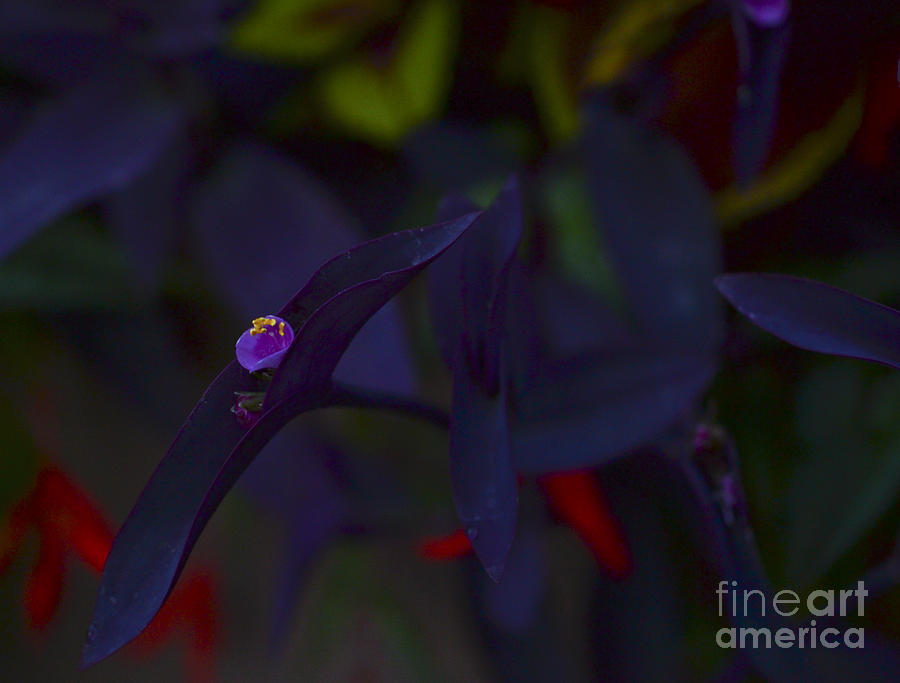 Purple Photograph - Flower In Ramsden Park by Alana Boltwood