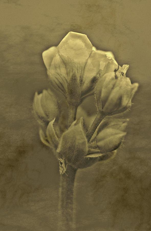 Flower Mixed Media - Flower In Sepia by Pablo Rodriguez Merkel