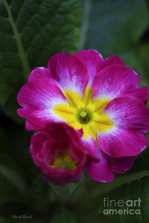 Flower Photograph - Flower In Spring by Deborah Benoit