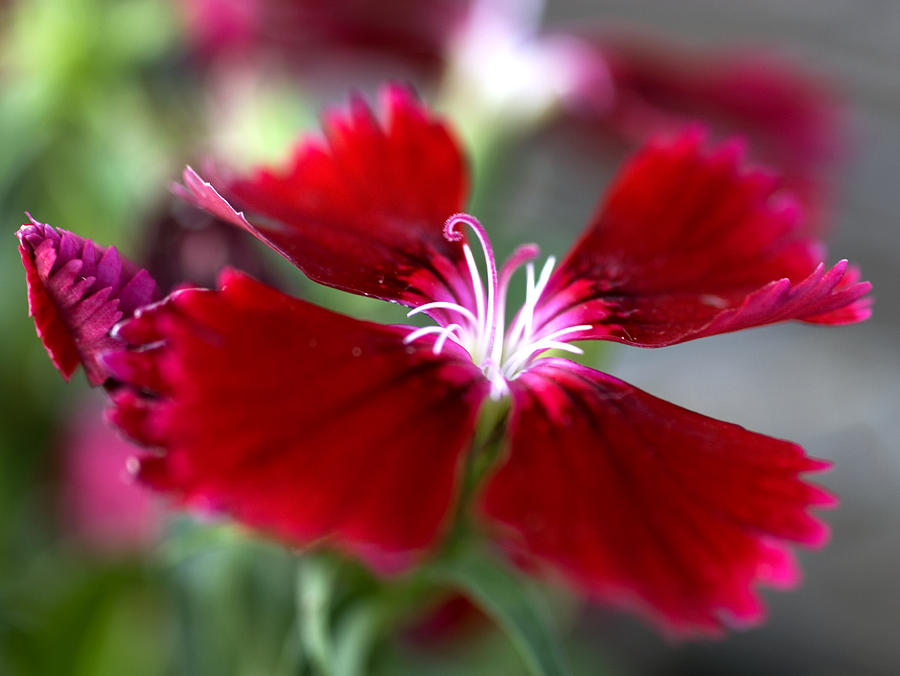 Flower Photograph - Flower by Jessica Wakefield