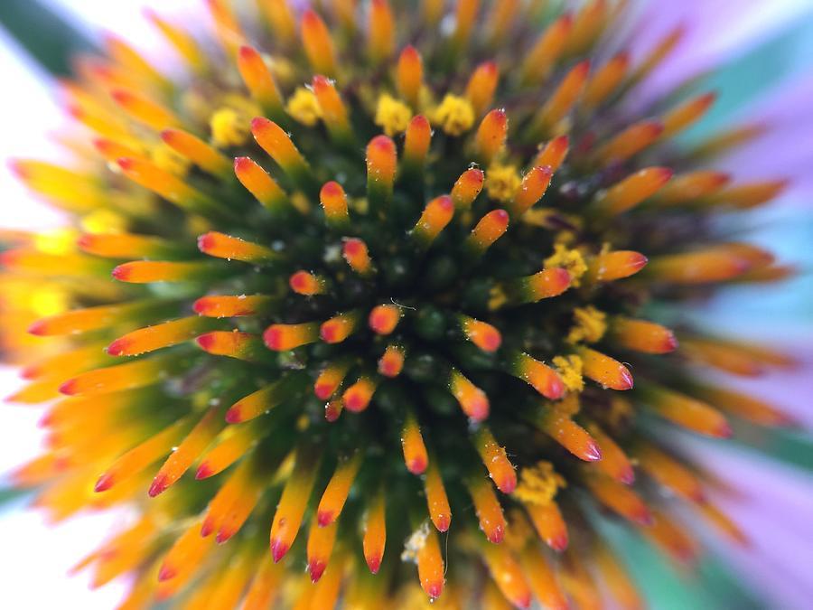 Flower Photograph - Flower by Maxim Tzinman