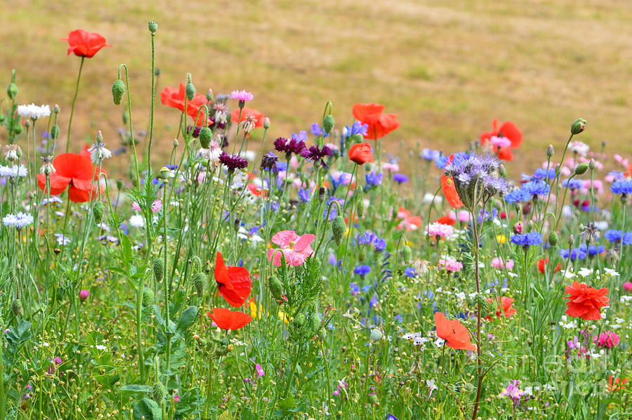 Flower Meadow Photograph - Flower Meadow by Andy Thompson