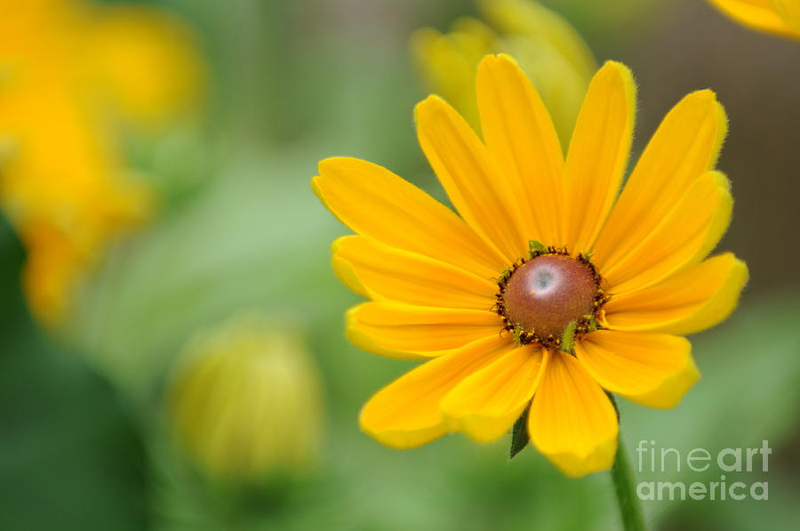 Yellow Photograph - Flower by Miguel Celis