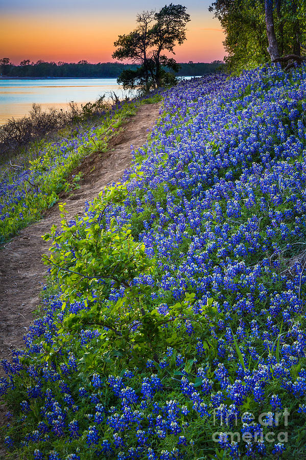 America Photograph - Flower Mound by Inge Johnsson