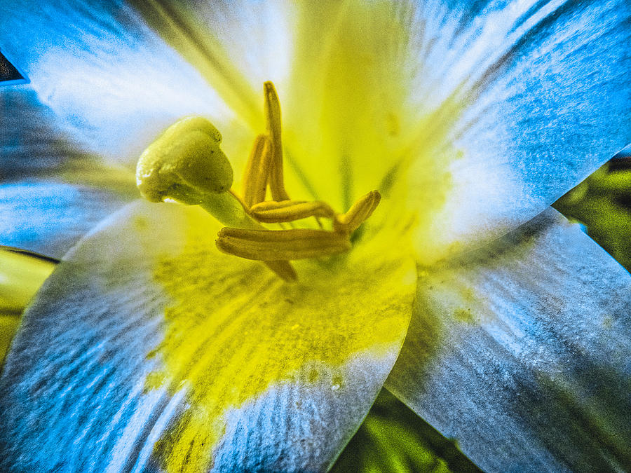 Flower Photograph - Flower No.4 by Michael DeBlanc
