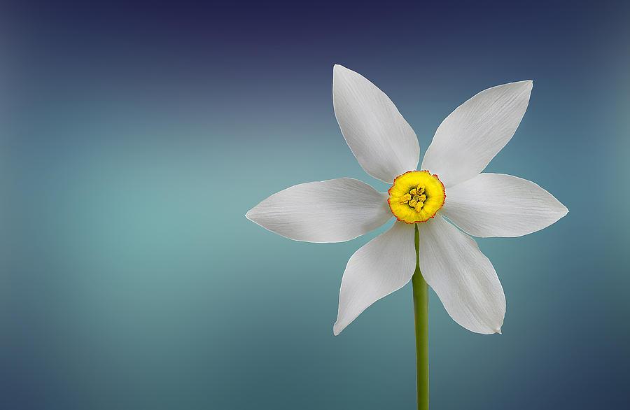 Flower Photograph - Flower Of Paradise by Bess Hamiti