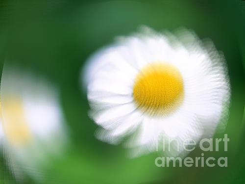 Flower Photograph - Flower by Prakash Kandk
