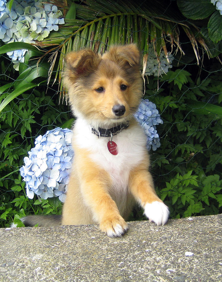 Flower Puppy Photograph By Sheltie Planet