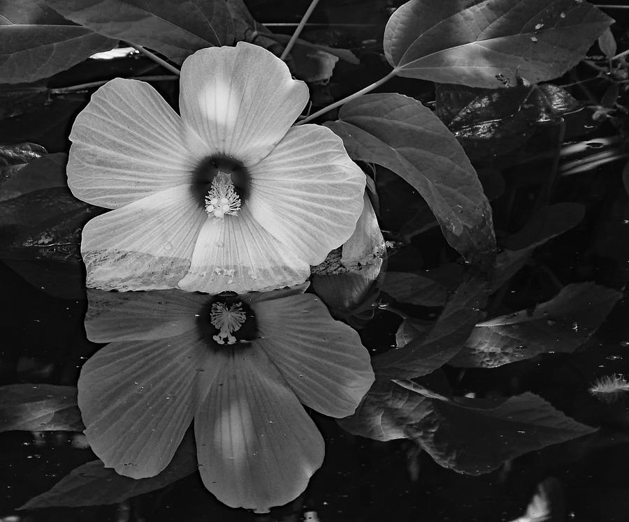 Flower Reflection Bw Photograph by Ann Keisling