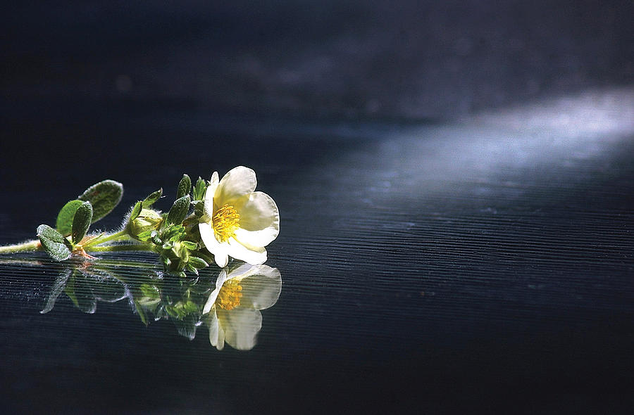 Flower Photograph - Flower Reflection by Steve Somerville