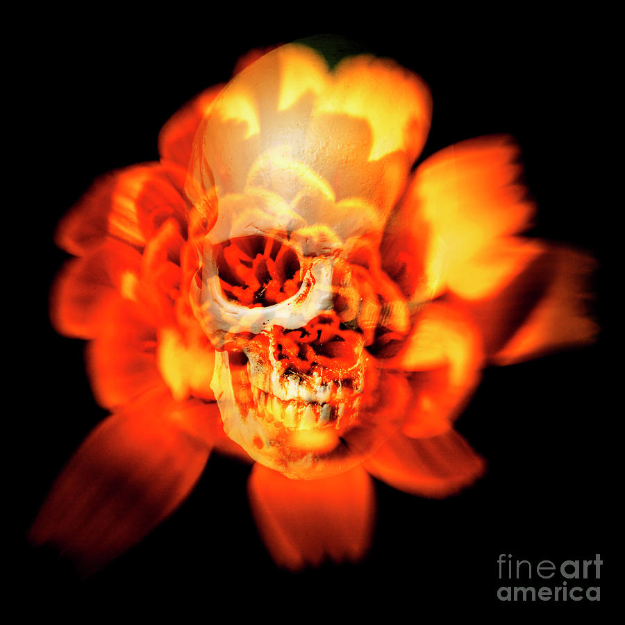Halloween Photograph - Flower Skull by Jorgo Photography - Wall Art Gallery