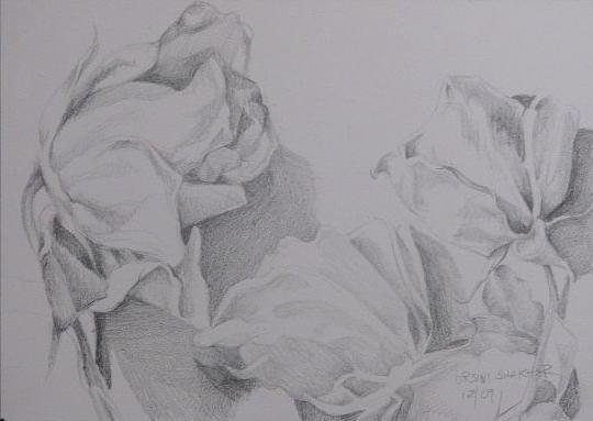 Drawing - Flower Study 2 by Julie Orsini Shakher