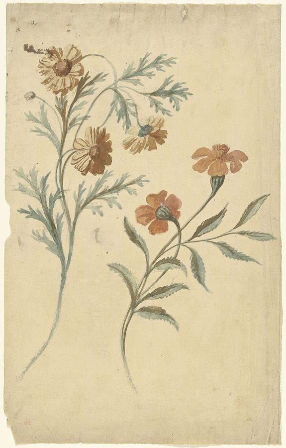 Flower Study Of A Red And A Brown Flower, Elias Van Nijmegen, 1677 - 1755 Painting