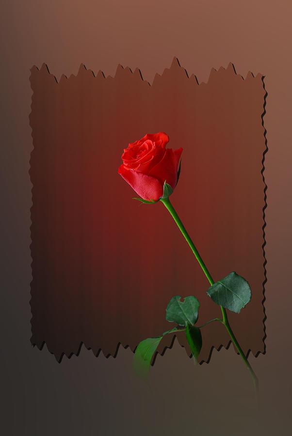 Flower Photograph - Flower Two by Deepak Pawar