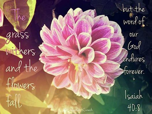 Flower Photograph - Flower With Scripture by Deborah Kunesh