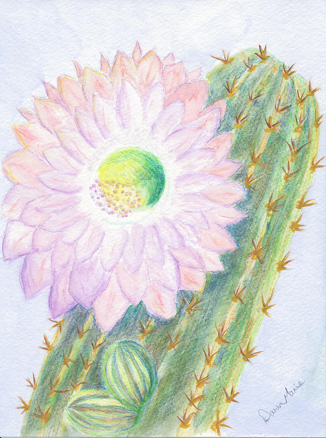 Flower Painting - Flowering Cactus by Dawn Marie Black
