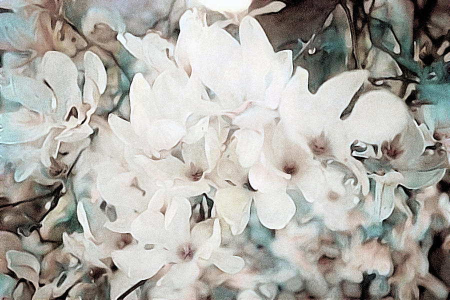 White Flowers Mixed Media - Flowering Star Magnolia by Susan Maxwell Schmidt