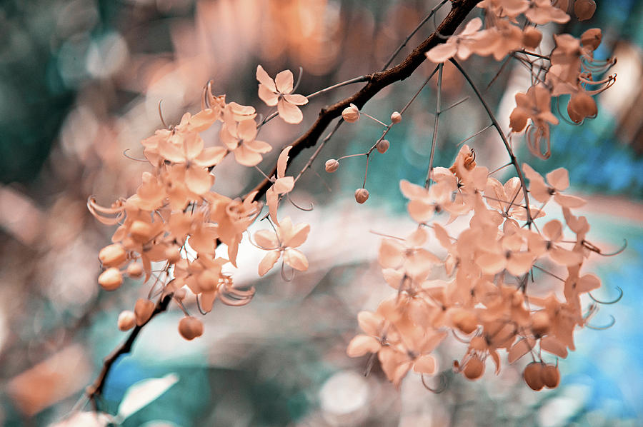Flowers Photograph - Flowering Tree. Nature In Alien Skin by Jenny Rainbow