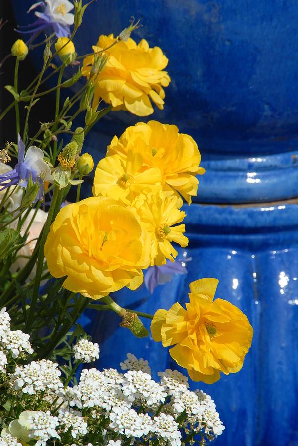 Flower Photograph - Flowers 187 by Joyce StJames