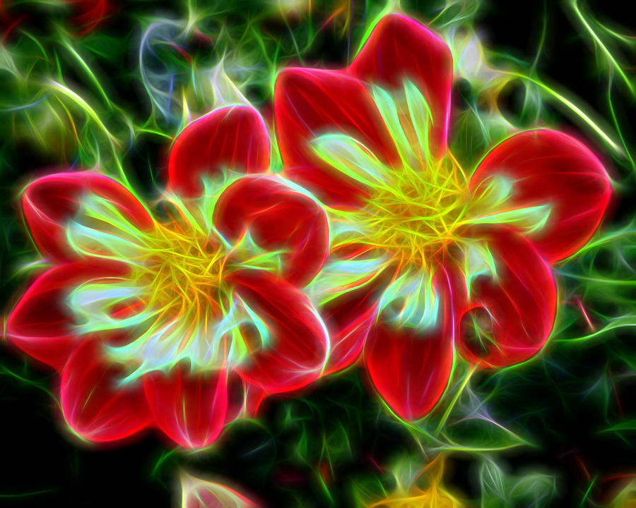 Flowers - Abstract 7 by Don Keisling