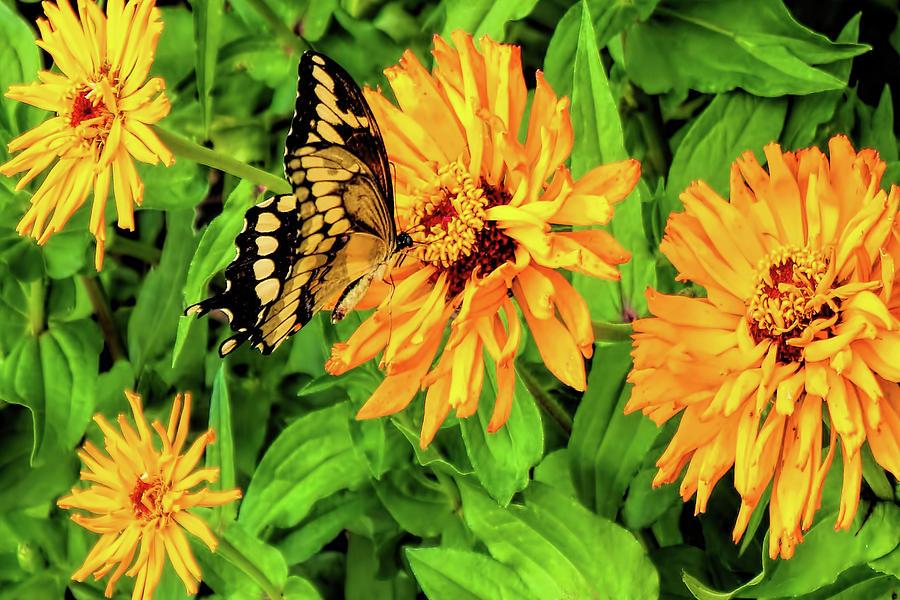 Flowers And Butterflies Photograph