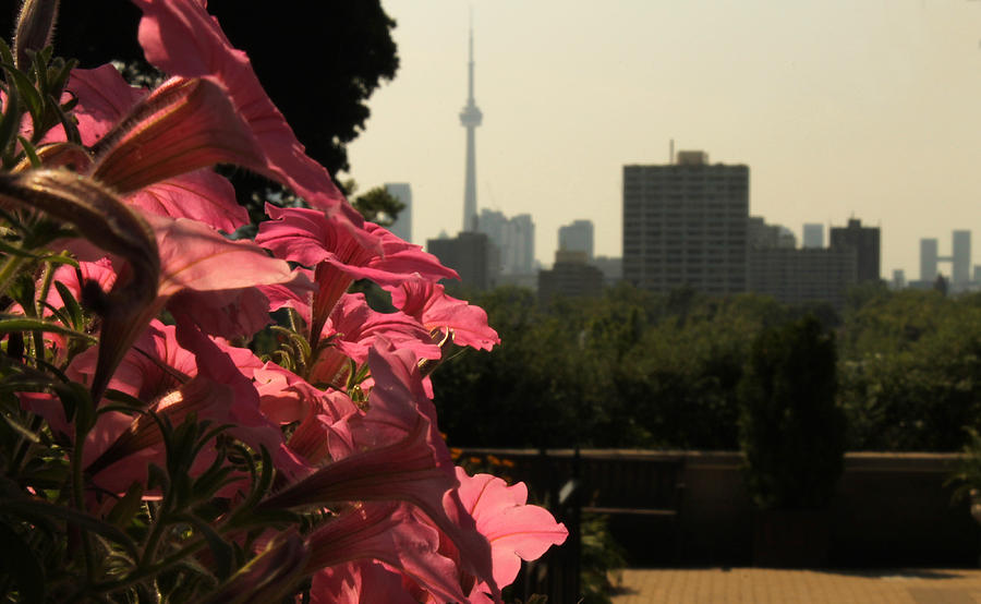Flowers Photograph - Flowers And The Toronto Skyline by Christine Buckley