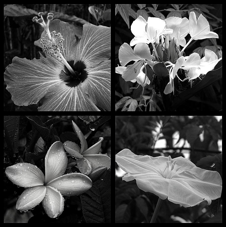 Flowers Photograph - Flowers by Andre Panatto