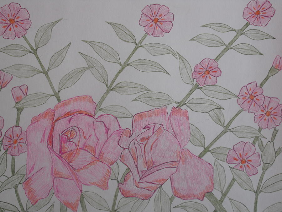 Rose Drawing - Flowers by Arold Augustin