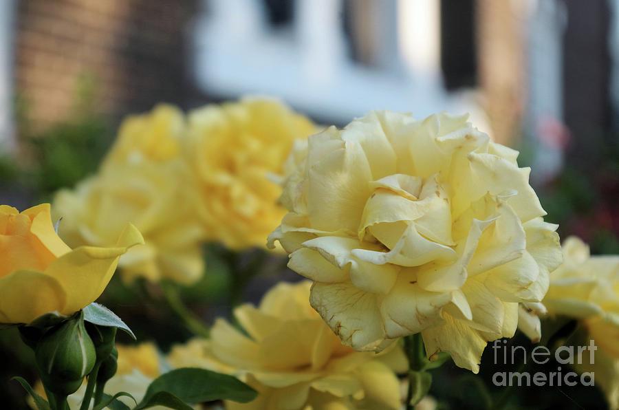 Flowers At Christ Church Photograph