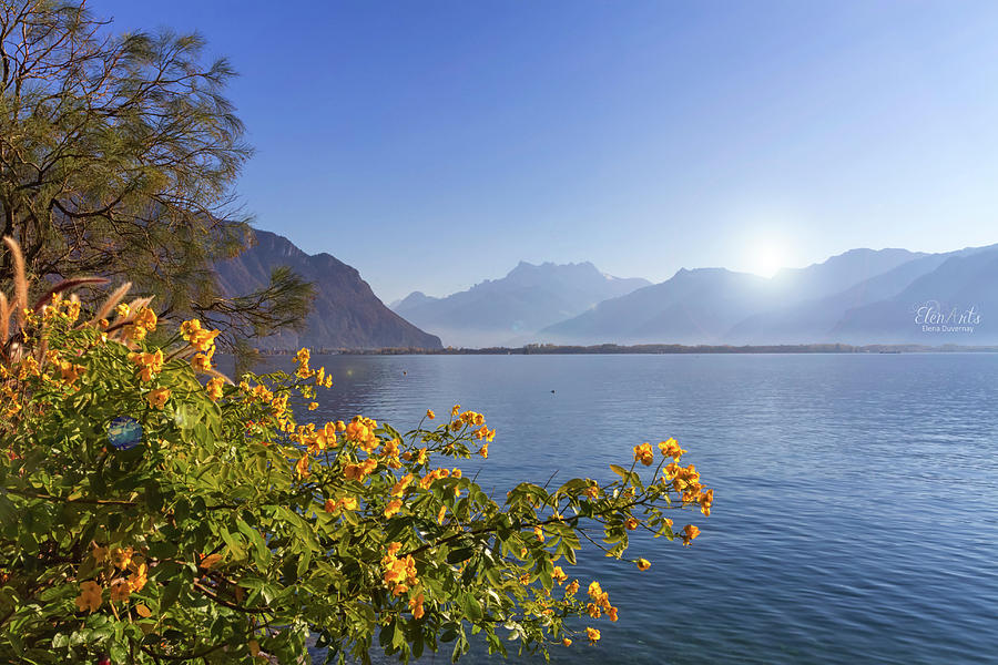 Flowers at Geneva lake, Montreux, Switzerland by Elenarts - Elena Duvernay photo