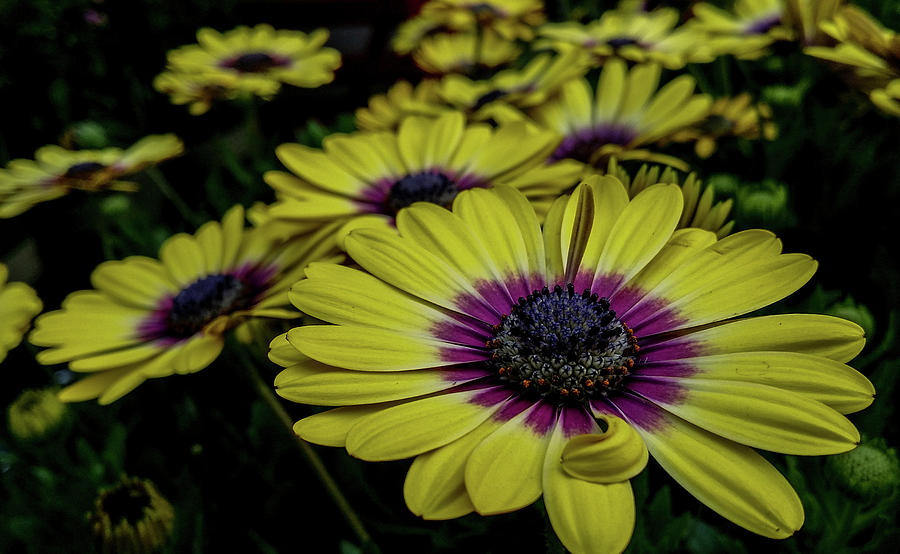 Flowers at lowes photograph by gordon visions flowers photograph flowers at lowes by gordon visions mightylinksfo