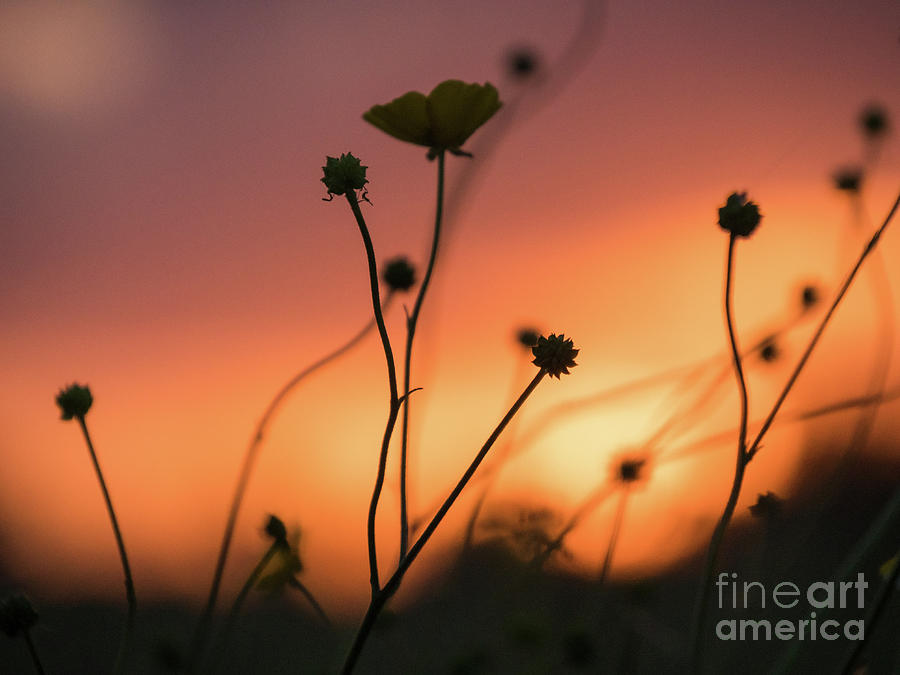 Dark Photograph - Flowers at Sunset by Paul Farnfield