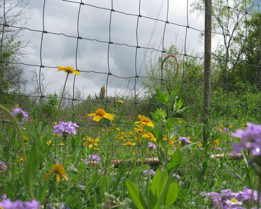 Flowers At The Fence by Cindy Clements