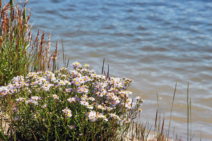 Flowers Photograph - Flowers At The Lake by Linda Benoit