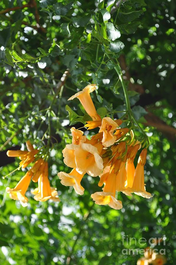 Flowers Photograph - Flowers  by Denise Ellis