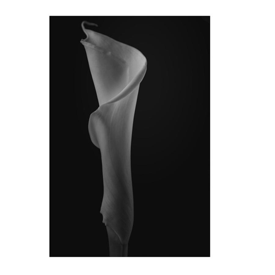 Beautiful Photograph - #flowers #flower #petal #petals #nature by David Haskett II
