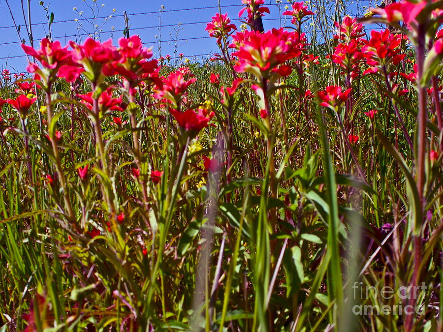 Wildflowers Photograph - Flowers High by Chuck Taylor