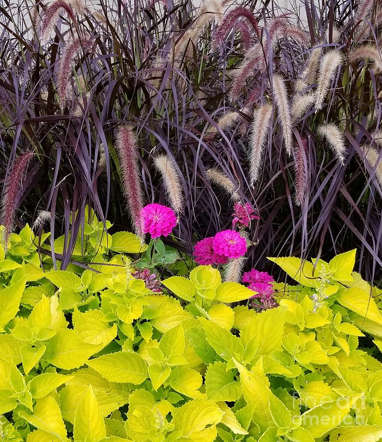 Flowers in Contrast by Sherry Oliver