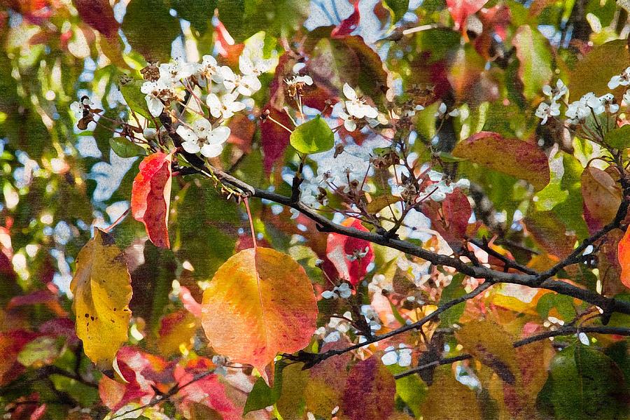 Evergreen Digital Art - Flowers In Pear Tree Digital Art by Sherry  Curry