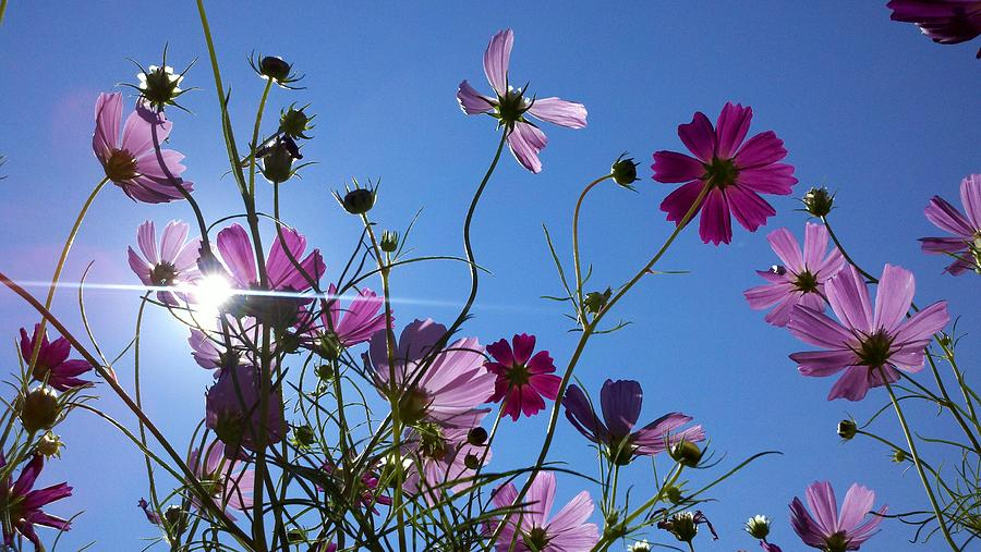 Flowers in Sunlight by Rick Macomber